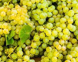 Niagara Grapes at the Market. Fine Art Food Photography Prin