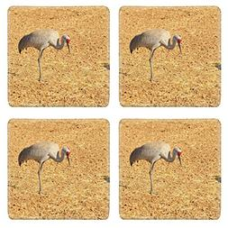 Liili Square Coasters Sandhill Cranes at Rio Grande Nature C
